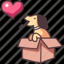 dog, pet, box, animal, cute, happy, gift