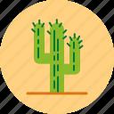 cacti, cactus, desert, plant icon