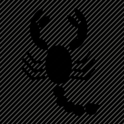 animal, arachnid, insect, scorpion icon