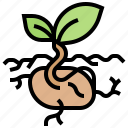 germinate, grow, plant, seedling, sprout icon
