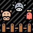 animal, domestic, livestock, cattle, farming