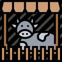 cattle, cow, livestock, farm, ranch