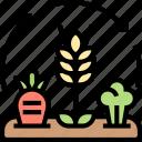 crop, rotation, farming, plantation, agriculture