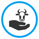 beef meat, care hand, cattle service, cow, insurance, livestock farm, vet support icon
