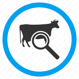 beef, bull, cattle, explore cow, find, locate, ox icon