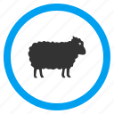 agriculture, animals, lamb, ram, sheep, veterinary, wool