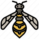 animal, animals, bug, entomology, insect, wasp