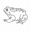 american toad, amphibian, frog, toad icon