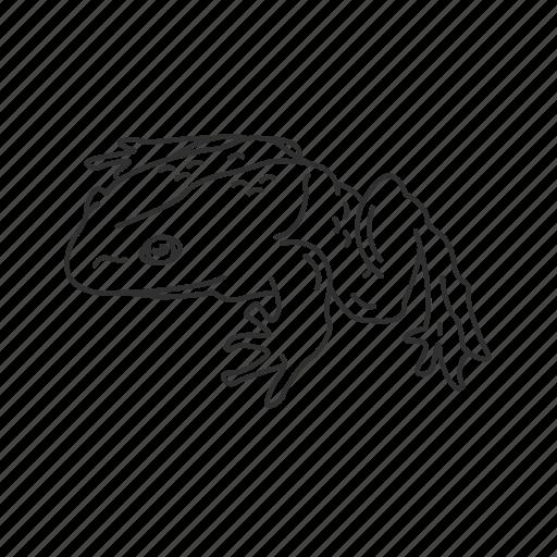 amphibian, frog, goliath, goliath frog, toad icon