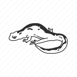 amphibian, long toed salamander, salamander icon