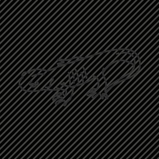 amphibian, northwestern salamander, salamander icon