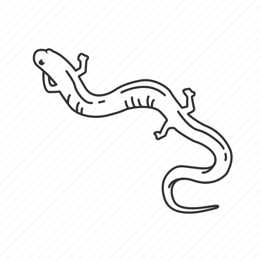 amphibian, red hills salamander, salamander icon