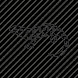 amphibian, salamander, tiger salamander icon