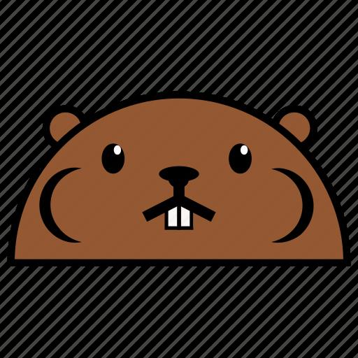 animal, beaver, binatang, ikon, rounded, warna icon