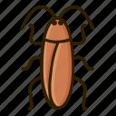 bug, cockroach, animal