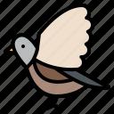 animal, bird, life, wild, zoo