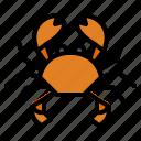 animal, crab, life, wild, zoo