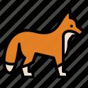 animal, fox, life, wild, zoo
