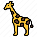 animal, giraffe, life, wild, zoo