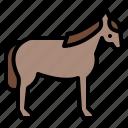 animal, horse, life, wild, zoo