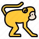 animal, life, monkey, wild, zoo