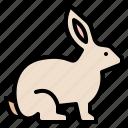 life, rabbit, animal, zoo, wild