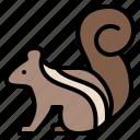 animal, life, squirrel, wild, zoo