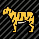 animal, life, tiger, wild, zoo