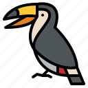 animal, life, toucan, wild, zoo