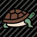 life, turtle, animal, zoo, wild
