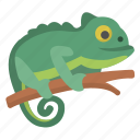 chameleon, amphibian, change, color, lizard, reptile, zoo