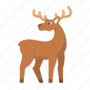deer, christmas, elk, holiday, hunt, reindeer, santa
