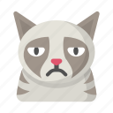 cat, emoji, frown, grumpy, kitten, meme, sad