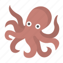 octopus, underwater, wildlife, seafood, squid, ocean, marine