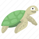 turtle, reptile, sea, tortoise, animal, ocean
