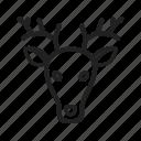 animal, deer, ears, face, faces, mammal, wildlife