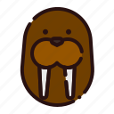 animal, carnivore, cartoon, fauna, seal, walrus, zoo icon