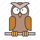 animal, bird, owl, wildlife, zoo icon