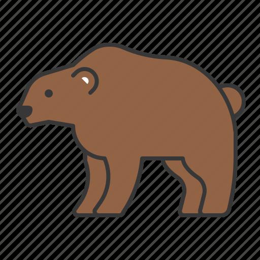animal, bear, mammal, wildlife, zoo icon