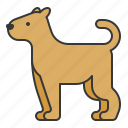 animal, dog, mammal, wildlife, zoo icon