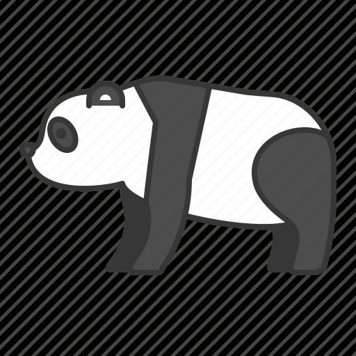 animal, mammal, panda, wildlife, zoo icon