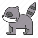 animal, mammal, raccoon, wildlife, zoo icon