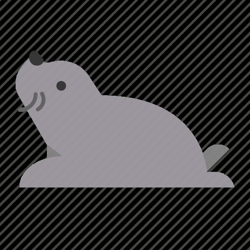 animal, mammal, seal, wildlife, zoo icon