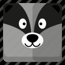 animal, chipmunk, wild, zoo