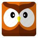 animal, bird, owl, zoo