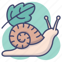 snail, insect, shell, slow