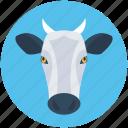 animal, calf, cattle, cow, farm animal