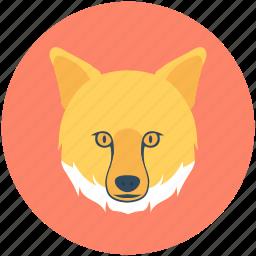 animal, brush wolf, coyote, fox, prairie wolf icon