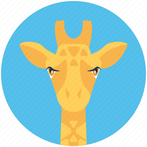 animal, camelopard, giraffe, mammal, wildlife icon