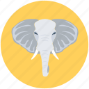 mammal, pachyderm, elephant, animal, zoo